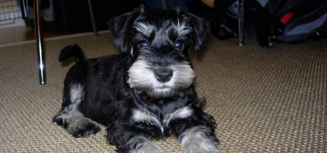 Molly Hund
